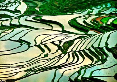 Ruộng bậc thang Sapa mùa nước đổ