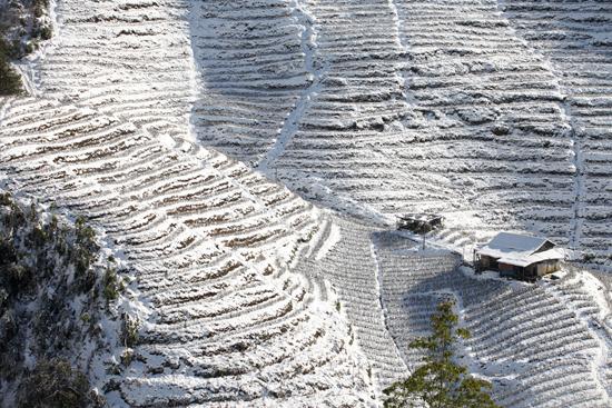 Ruộng bậc thang Sapa tuyệt đẹp trong màn tuyết trắng