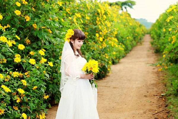 Hoa dã quỳ Mộc Châu